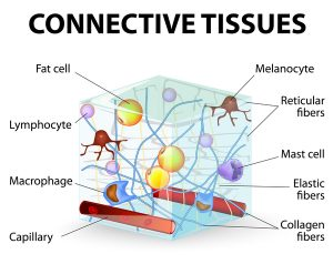 connective-tissues